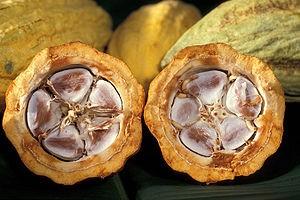 Fair trade csokoládé