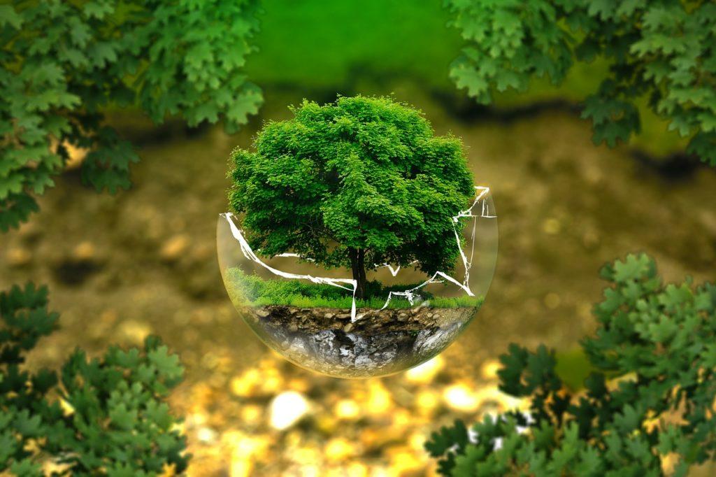 Felelős erdőgazdálkodás