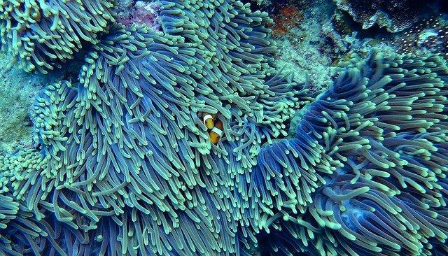 Korallzátonyok feltérképezése műholddal