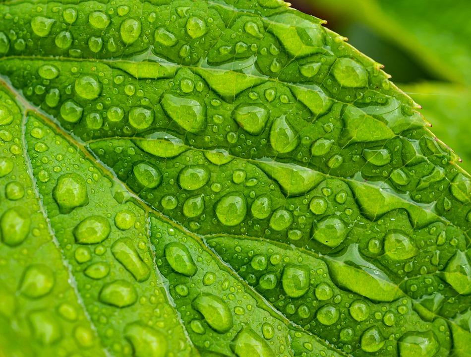 Zöld konzultáció